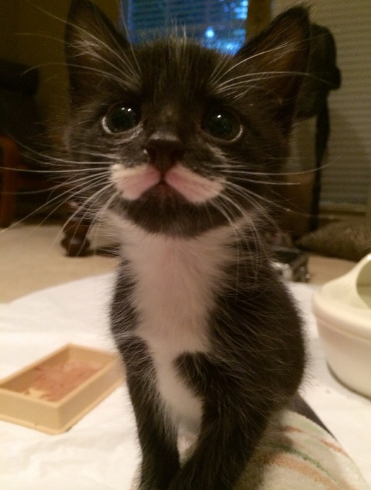Last day with Mustache. He is one of five kittens I've bottle fed since birth