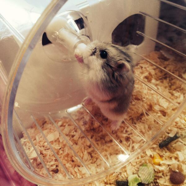 20 Small Cute And Lovely Pictures Of Hamsters