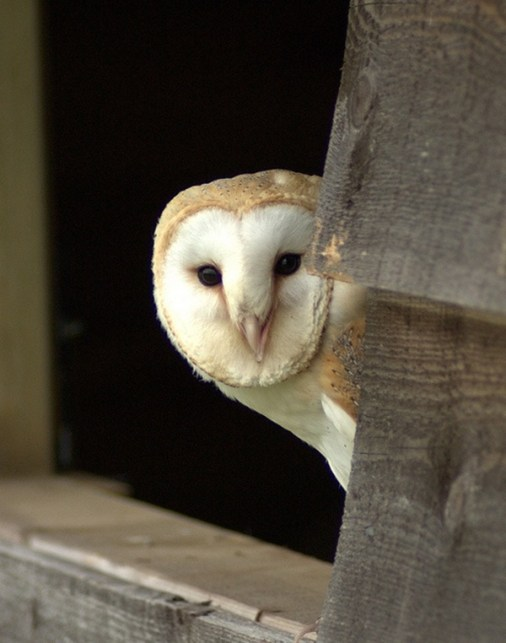 owl-pictures-6