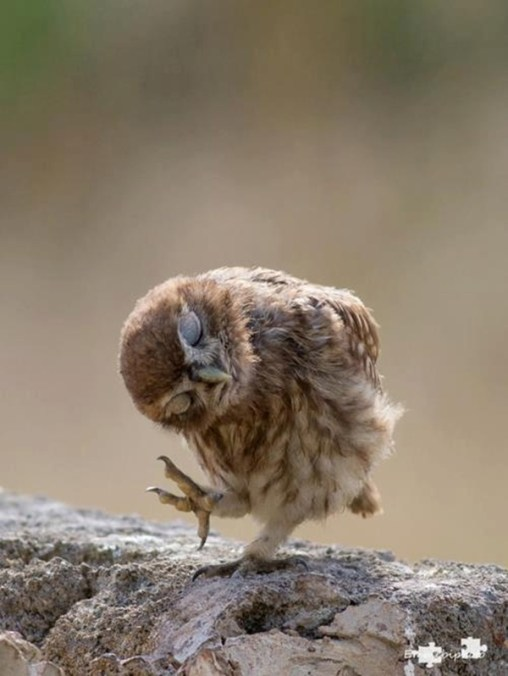 owl-pictures-9