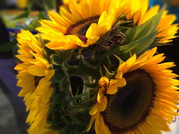 Jean Talon Market Montreal sunflowers