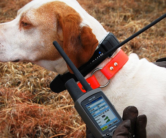 Never Lose Your Dog With GPS Dog Collar CoolGiftsReview