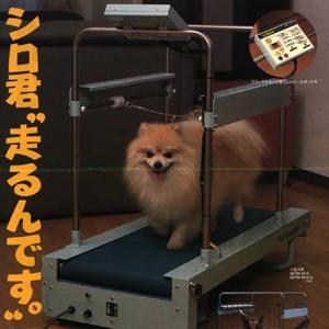 1048392545_dogwalker.jpeg