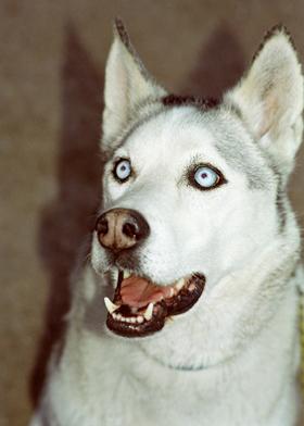 P-Sutherland-Doggy