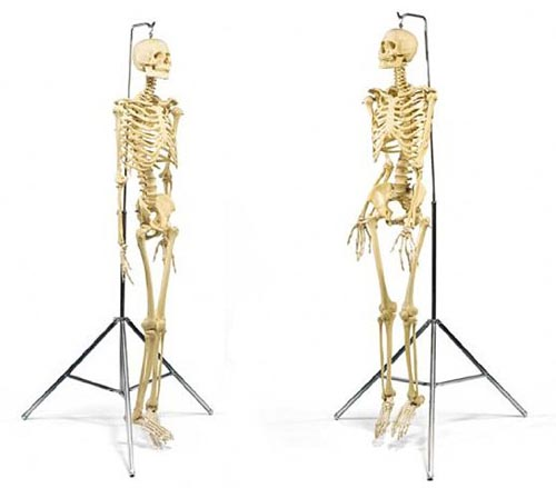 DamienHirstSkeleton.jpg