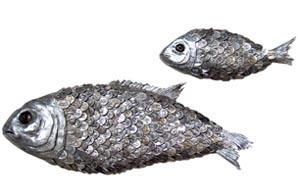 milagra-fish.jpg