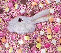 liz_wolfe.rabbit.jpg