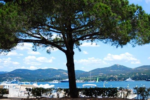 pastis-tree.jpg