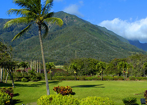 coffee-hawaii-tisane1.jpg