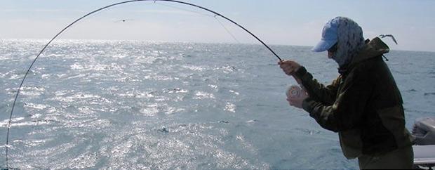 hardy-fish1.jpg