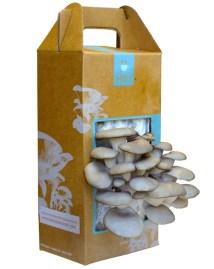 Mushroom-Kit-gg1.jpg