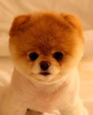 boo-dog-calendar1.jpg