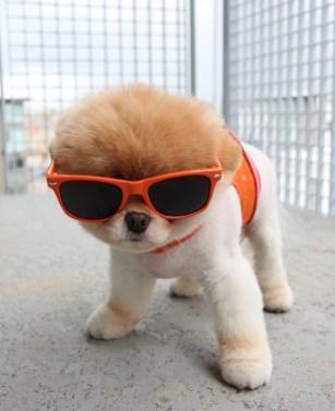 boo-dog-calendar2.jpg