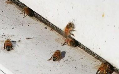 BK-apiary2.jpg