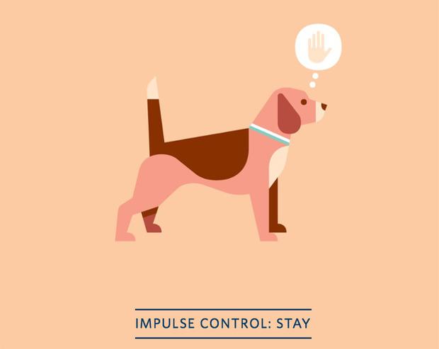Positively Dog Training
