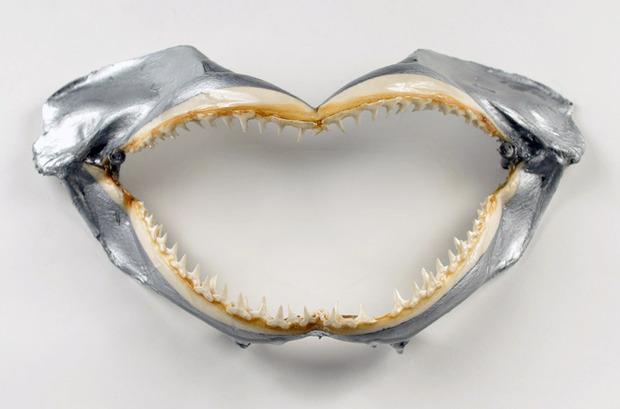 SA-meet-your-maker-shark-jaw-2.jpg