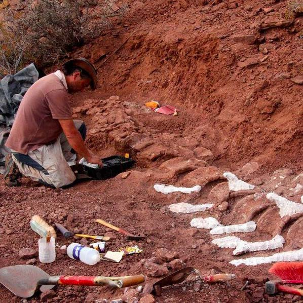 Fossils Suggest Earth's Largest-Ever Land-Dwelling Animal - Cool Hunting