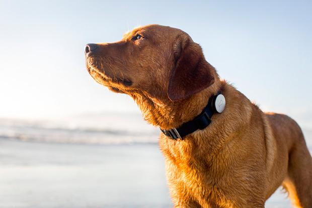 Whistle-dog-app-1.jpg