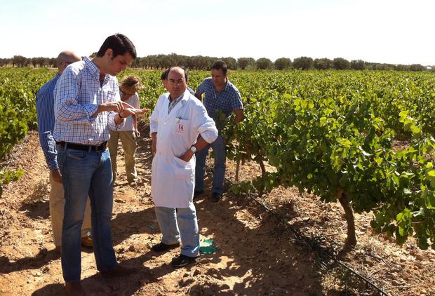 spanish-vines-1.jpg