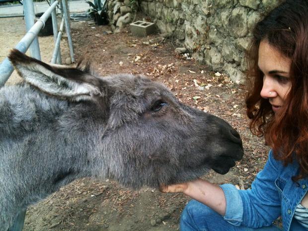 AnimalMadnessDonkey.jpg