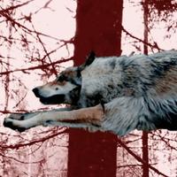 dreamers-wolves-lup.jpg