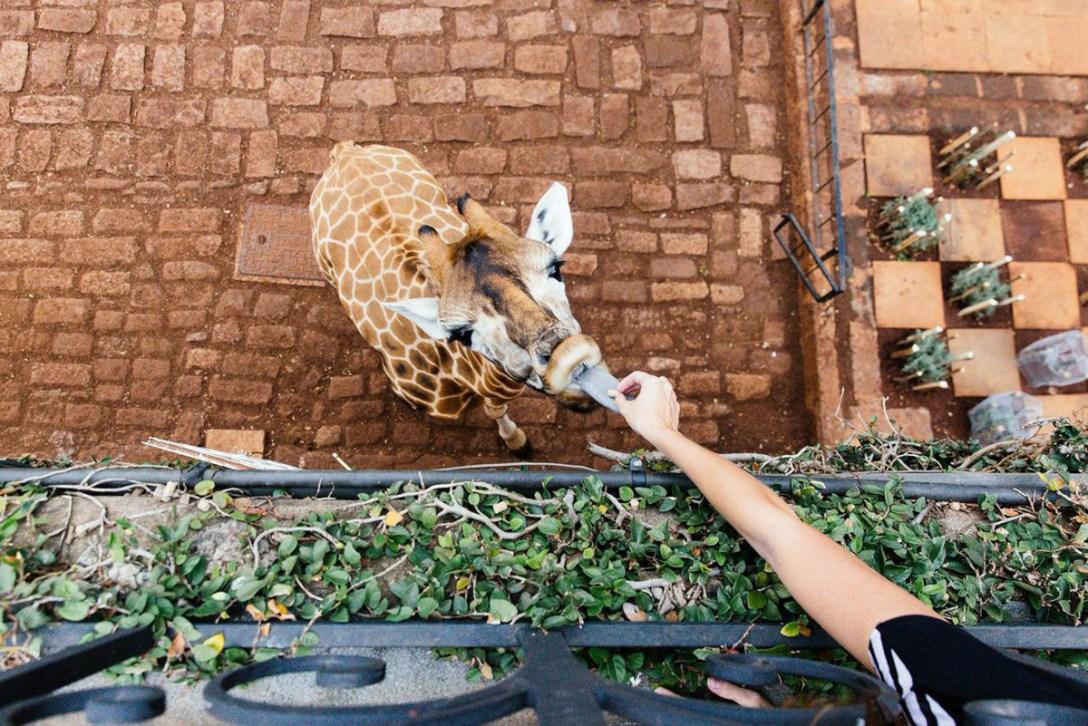 GiraffeManor-Nariobi-03.jpg