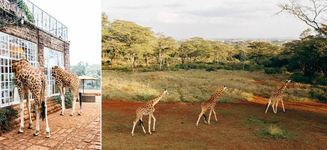GiraffeManor-Nariobi-06.jpg