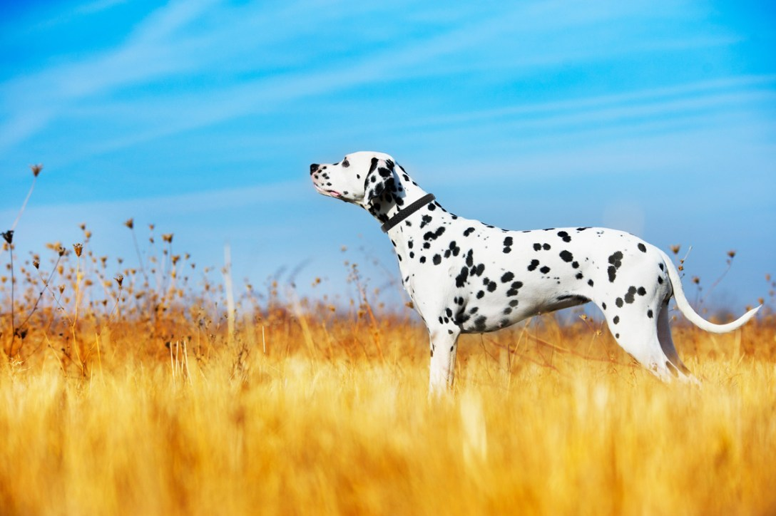 Dogtelligent-Dog-Collar.jpg