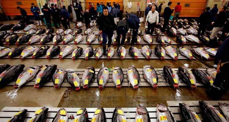 Atunes listos para ser subastados en Tsukiji