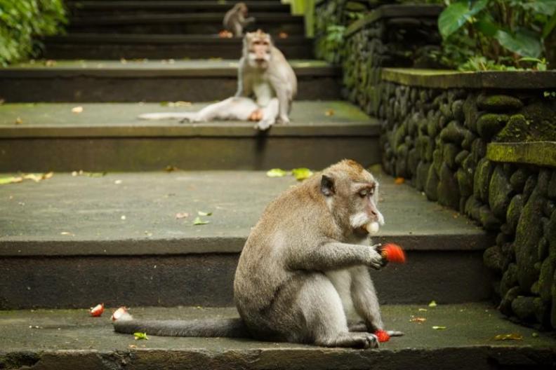 monkey forrest ubud