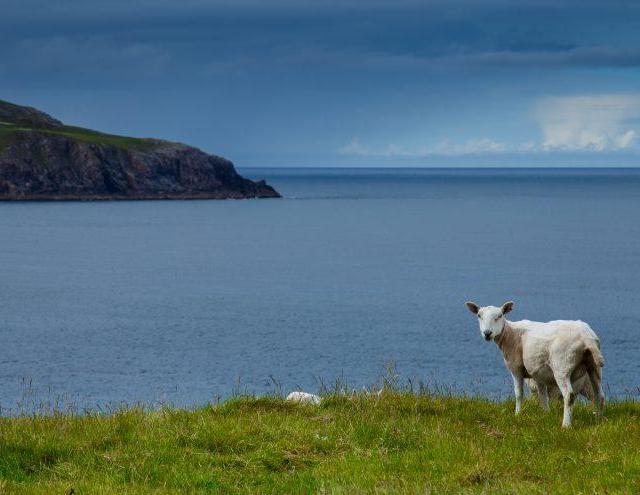 selfish in scotland