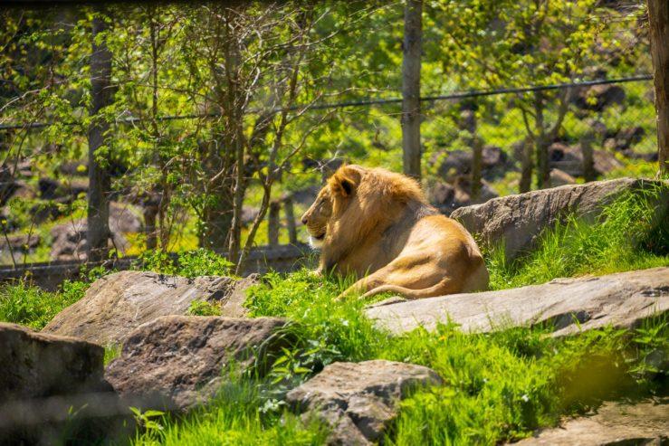 Herberstein zoo