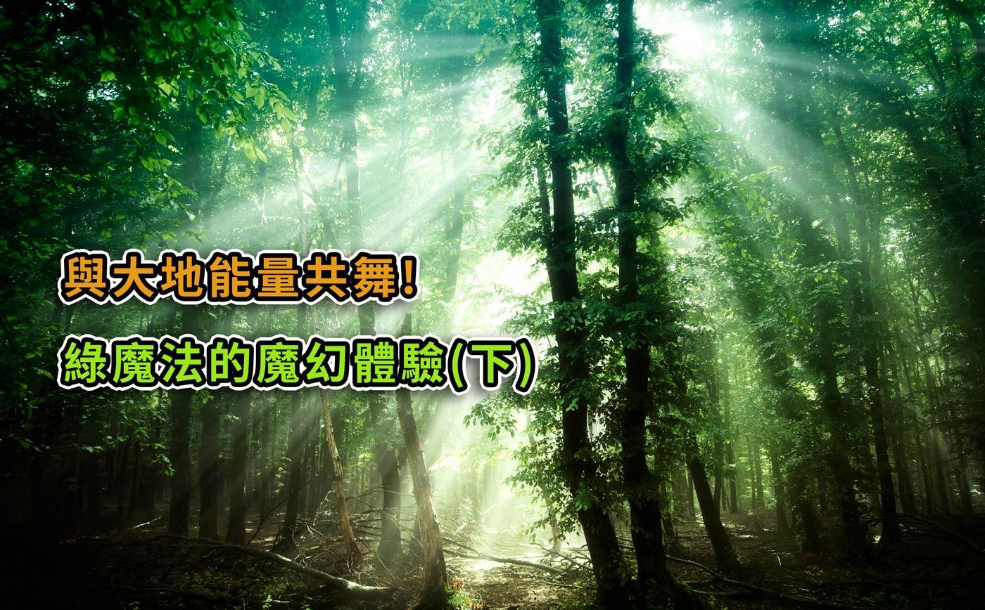 與大地能量共舞!綠魔法的魔幻體驗