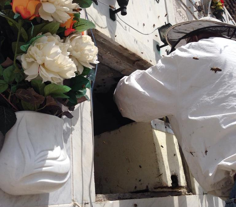 Watch out! Bees at work!