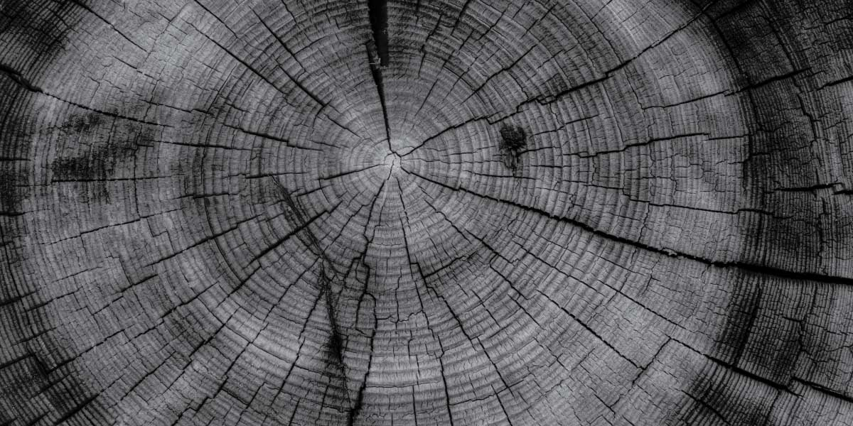 services tree rings
