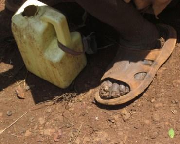 Descalços sobre la terra / Descalzos sobre la tierra