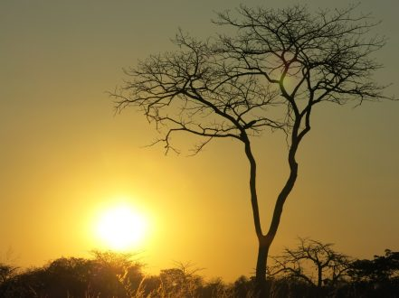 Toda la sangre es roja africa alegria gambo alegria sin fronteras dr alegria etiopia gambo