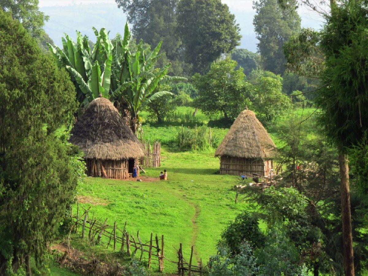 Plantar árboles para que no podamos ver el bosque africa alegria gambo alegria sin fronteras etiopia gambo