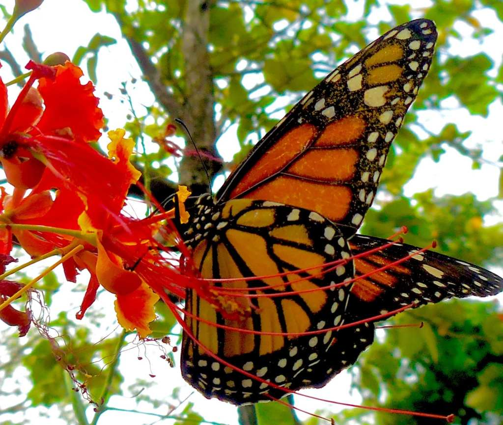 Orange Butterfly in Tree