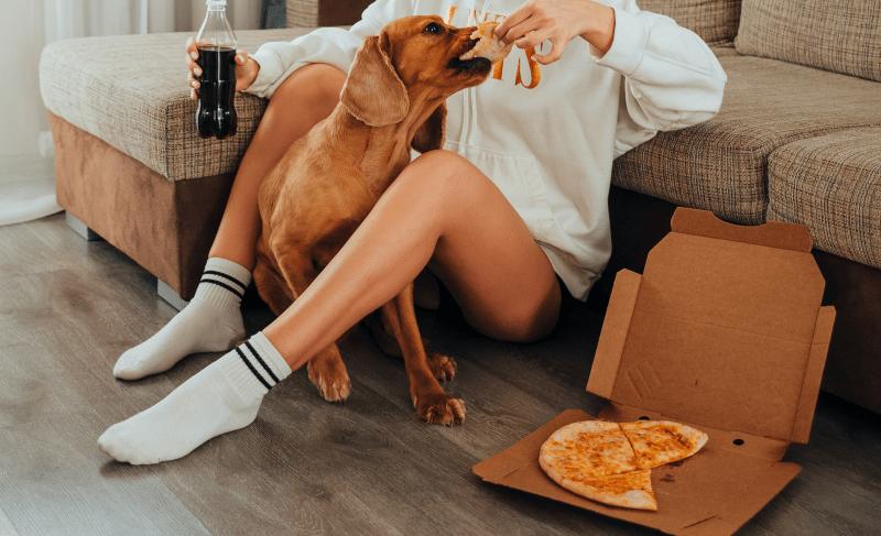 dog eating pizza
