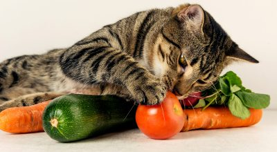cat playing with vegetables