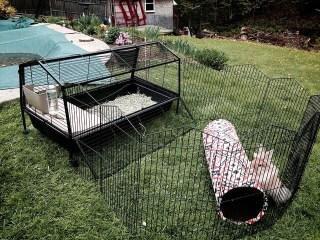 rabbit enclosures