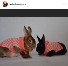 bunny treat