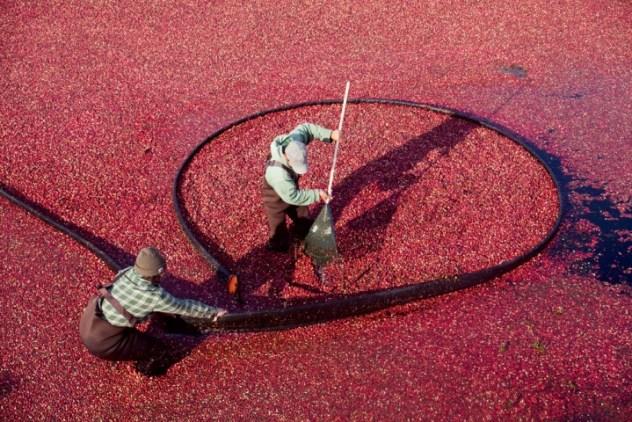 cranberry-bog-720x480