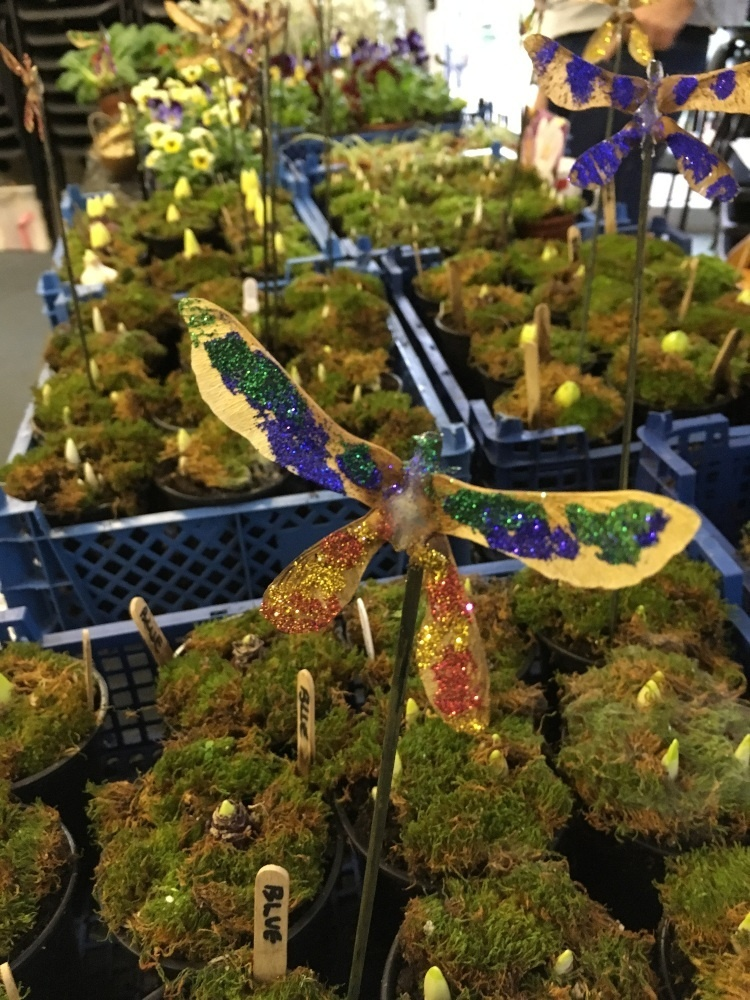 rows of plants with cut out dragon flies with glitter