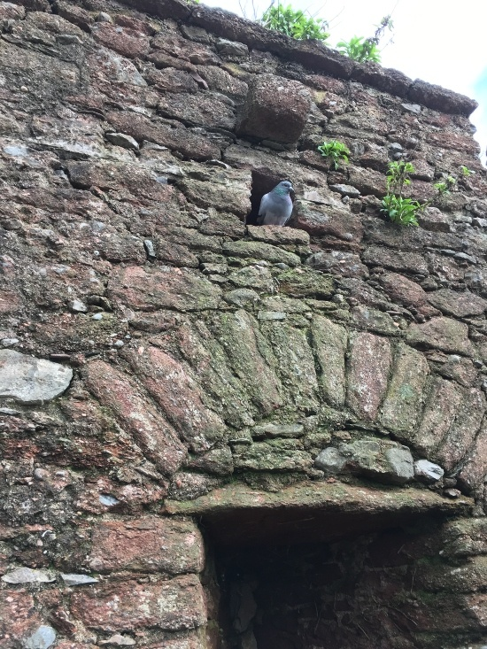 a pigeon is in a hole in an old wall above a doorway