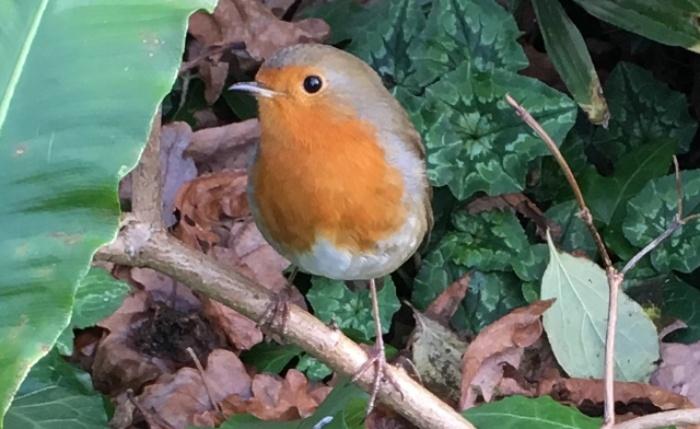 a robin sitting a twig