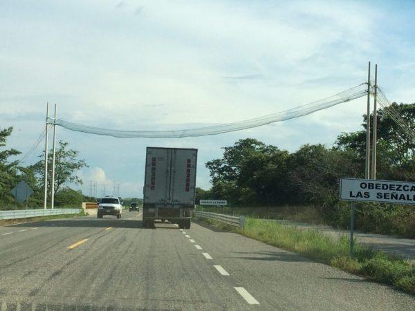 Pont de singe sur la route de Campeche Mexique