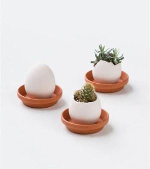 L AVANT GARDISTE – Plante à faire pousser Eggling