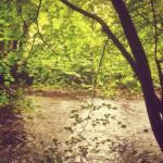 River in Glenarm forest